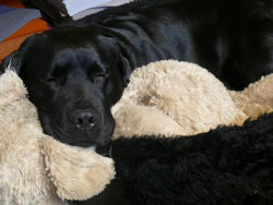 Troy-slaapt-weblog