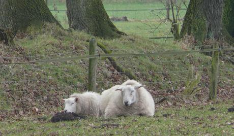Slapende schapen weblog
