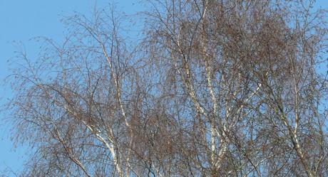 Berk en Blauwe lucht weblog