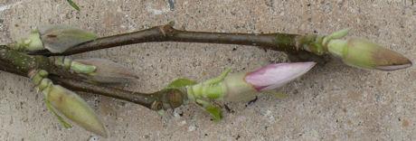 Magnolia weblog