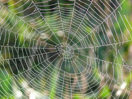 Spinnenweb weblog