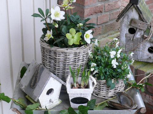 Wit voorjaar weblog