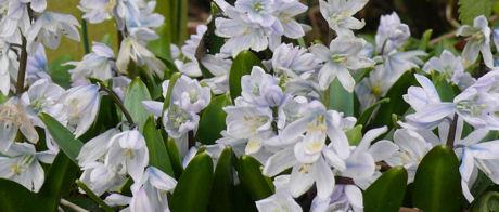 Voorjaarsbloemen weblog