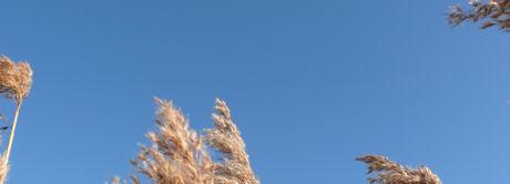 Stralend Blauwe lucht.weblog
