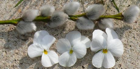 Wilgenkatjes en viooltjes 3 weblog