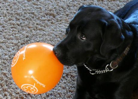 Troy met ballon weblog