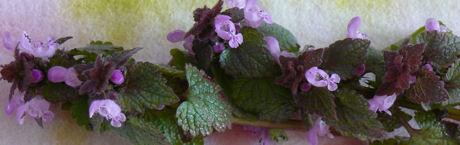 Bloemen weblog