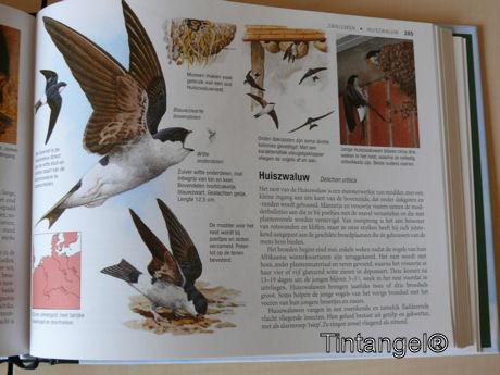 Zwaluw in het boek weblog