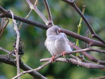 Vreemde Vogel Weblog
