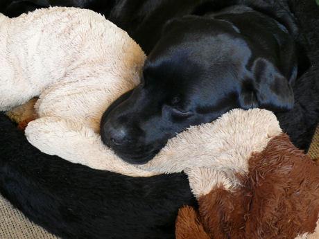 Troy slaapt tevreden weblog