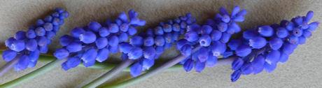 Blauwe druifjes weblog