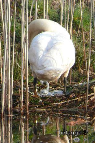 Eieren in het nest weblog