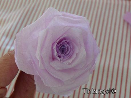 Stap voor stap roos 11 w