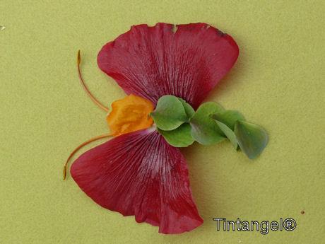 Zomerknutselweblog vlinder