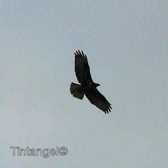 Roofvogel weblog