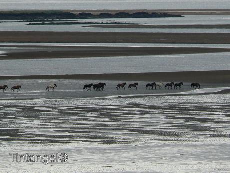 IJsland2011 150