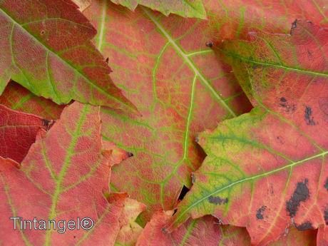 Herfstbladeren close-up w