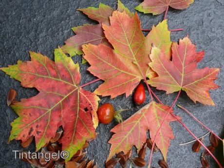 Herfstbladeren w