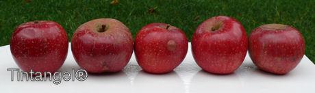 Glanzende appeltjes w