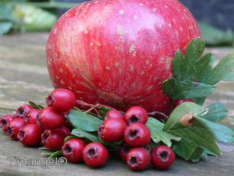 Sterappel en meidoorn w