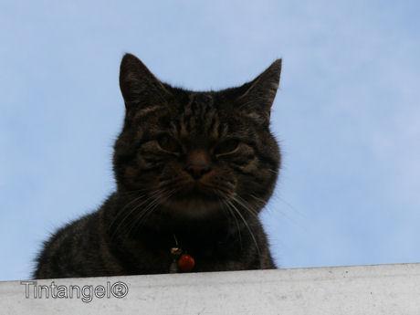 Poes op het dak w