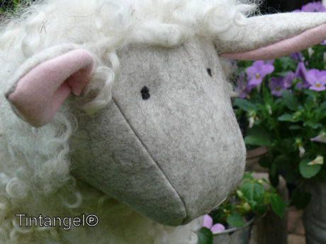 Witte schapenkop weblog