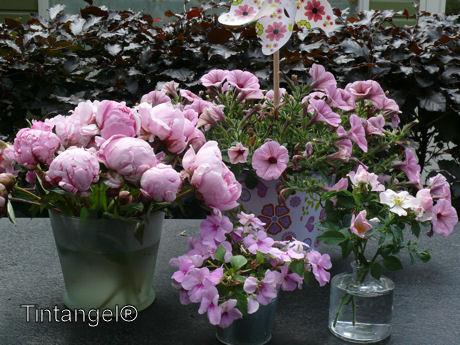Roze bloemen weblog