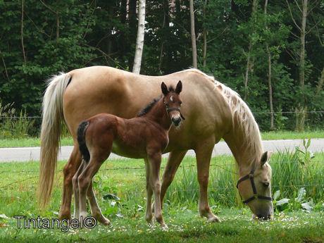 Paard met veulen weblog