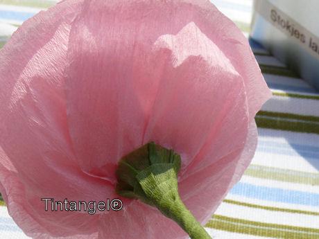Onderkant roos weblog