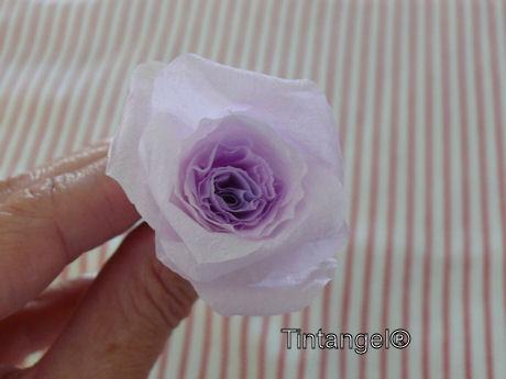 Stap voor stap roos 6w