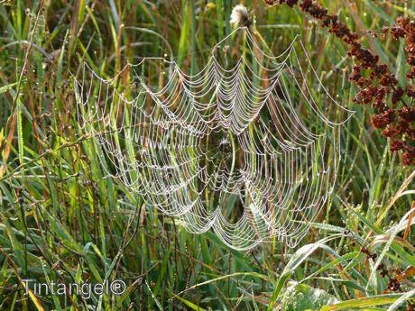 Spinnenweb w