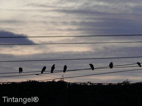 Vogels ww