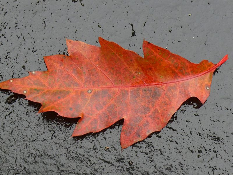 Herfst 1 w