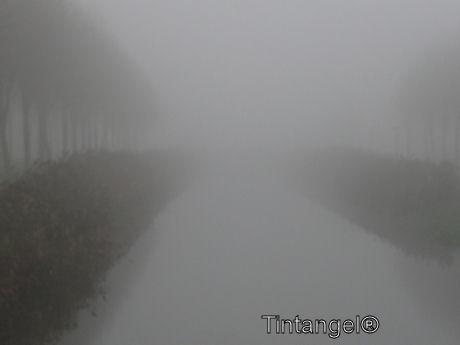 Kanaal in de mist w