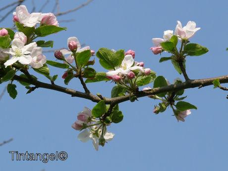 Appelbloesem weblog