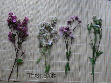 Koekoeksbloemen 4 stuks weblog