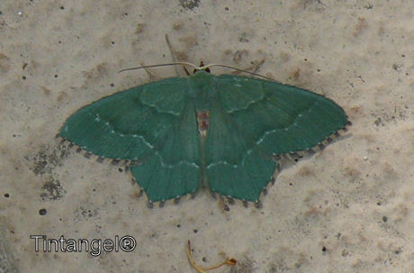 Groene vlinder weblog