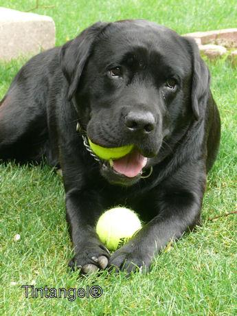 Troy met tennisballen weblog