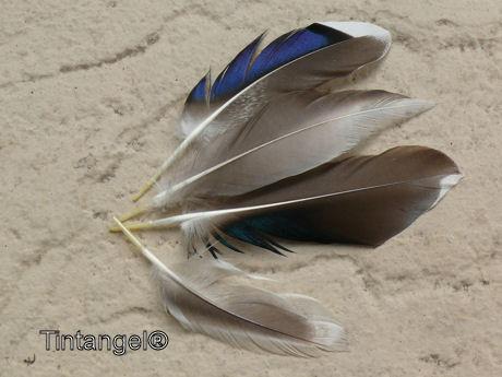 Eendenveren weblog