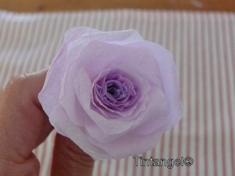 Stap voor stap roos 7w
