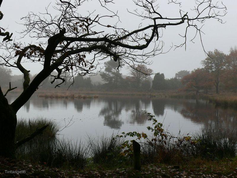 Herfst 2 w