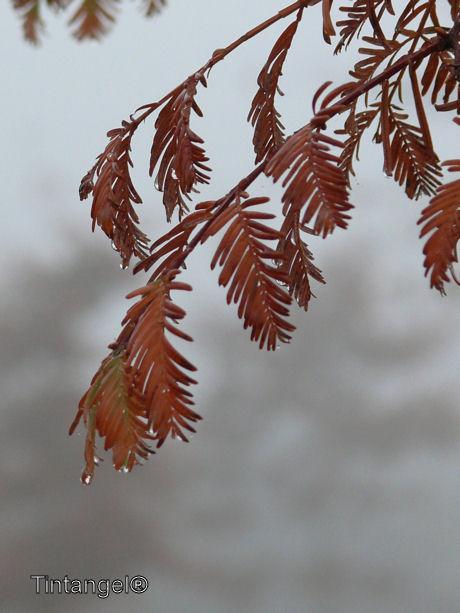 Kleur in de mist w