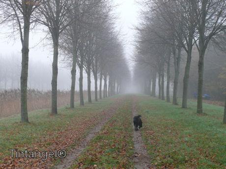 Weer mist 10 nov.