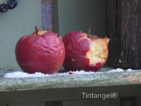Aangevreten appels web