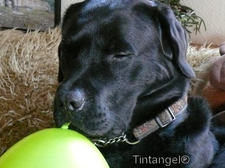 Troy met ballon web