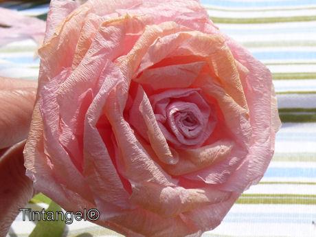 Gekleurde roos weblog