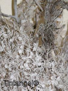 Nepsneeuw web