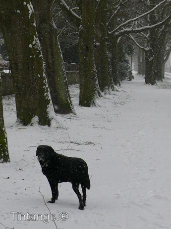 Troy in de sneeuw 3 w