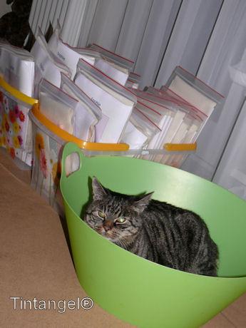 Kat in het bakkie web
