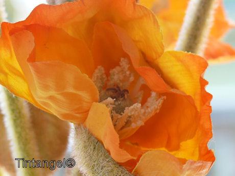 Oranje web